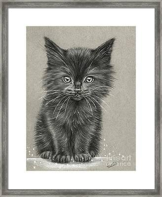 Black Kitten Framed Print