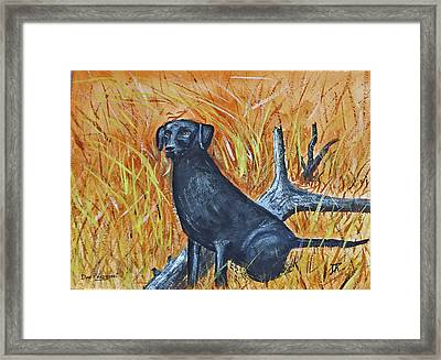 Framed Print featuring the painting Black Lab-2 by Donald Paczynski