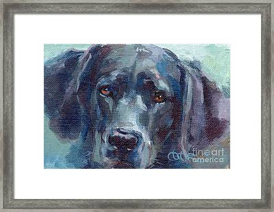 Black Lab Bandit Framed Print