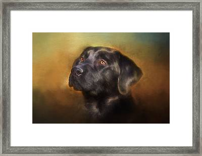 Black Lab Portrait 2 Framed Print