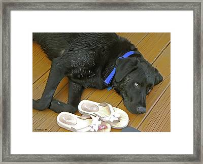 Black Lab Resting Framed Print by Brian Wallace
