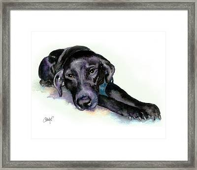 Black Lab Stretching Out Framed Print