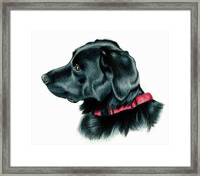 Black Lab With Red Collar Framed Print by Heather Mitchell