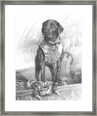 Black Labrador Duck Hunting Pencil Portrait Framed Print by Mike Theuer