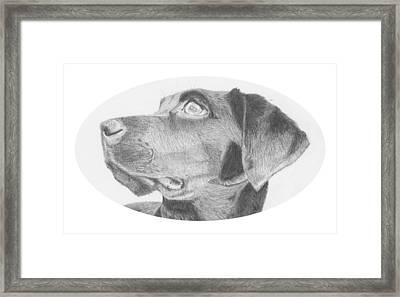 Black Labrador Retriever Headshot Framed Print by David Smith
