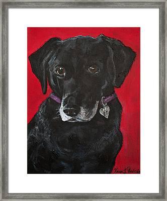Miss Priss The Black Labrador Retriever Mix Framed Print by Karen Dortschy