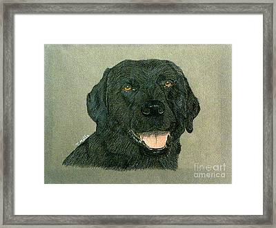Framed Print featuring the drawing Black Labrador Retriever by Terri Mills