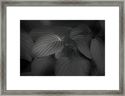 Black Leaves Framed Print