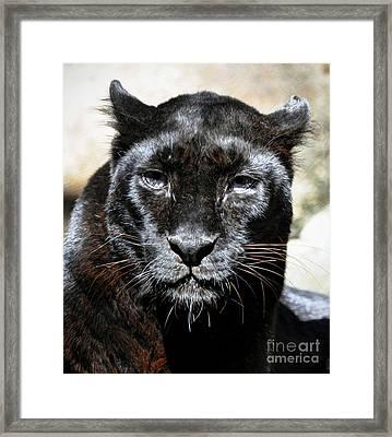 Framed Print featuring the photograph Black Leopard by Savannah Gibbs