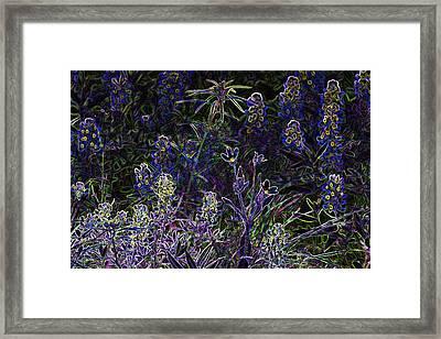 Black Light Wildflowers Framed Print by Linda Phelps