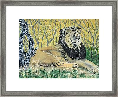 Black Maned Lion Framed Print by Caroline Street
