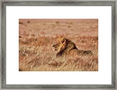 Black-maned Lion Of The Kalahari Waiting Framed Print