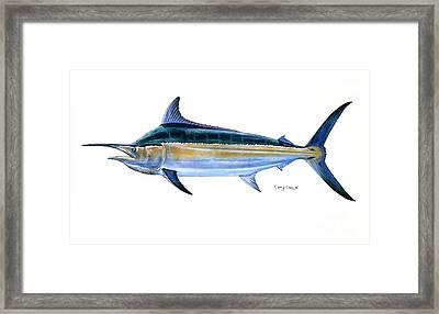 Black Marlin  Framed Print by Carey Chen