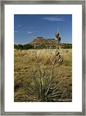 Framed Print featuring the pyrography Black Mesa Cacti by Charles Warren