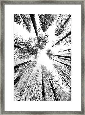 Black N White Sky-trees Framed Print by Rick Pham