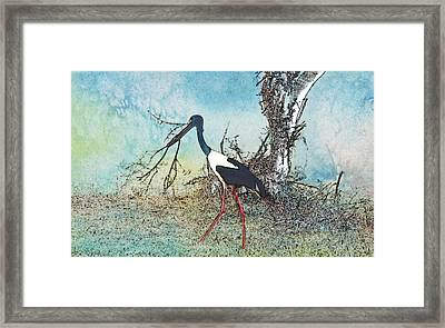 Black Neck Stork  Framed Print by Manjot Singh Sachdeva