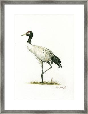 Black Necked Crane Framed Print