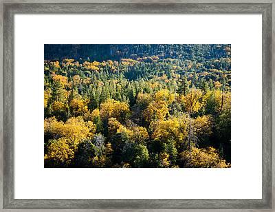 Black Oaks Turning Framed Print by Alexander Kunz
