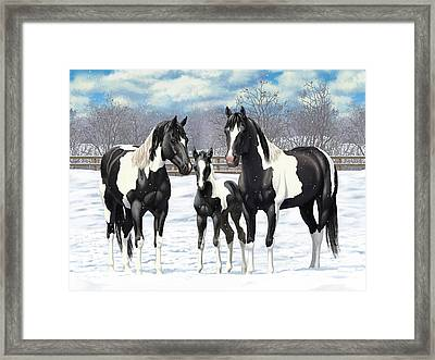 Black Paint Horses In Winter Pasture Framed Print by Crista Forest