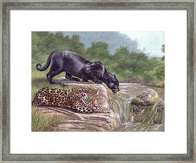 Black Panther And Jaguar Framed Print