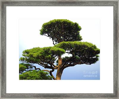 Black Pine Japan Framed Print by Susan Lafleur