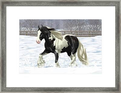 Black Pinto Gypsy Vanner In Snow Framed Print by Crista Forest