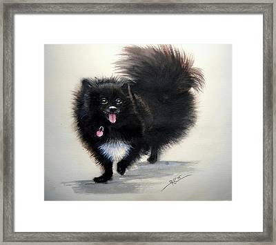 Black Pomeranian Dog 3 Framed Print