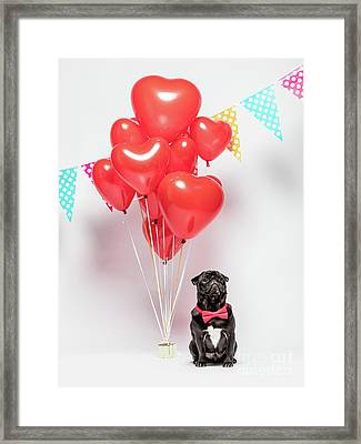 Black Pug Dog In A Red Bowtie With Valentine Decorations. Framed Print
