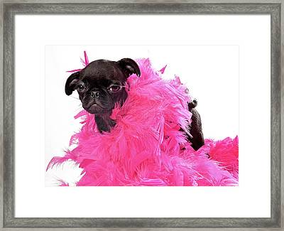 Black Pug Puppy With Pink Boa Framed Print by Susan Schmitz
