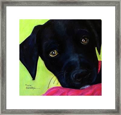 Black Puppy - Shelter Dog Framed Print