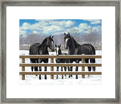 Black Quarter Horses In Snow Framed Print by Crista Forest