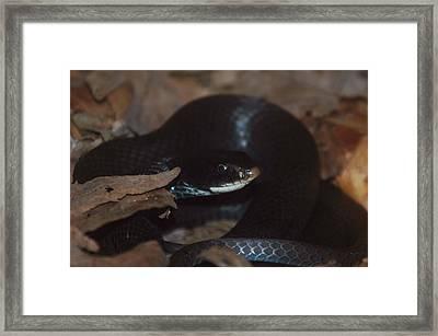 Black Racer Framed Print by Aaron Rushin