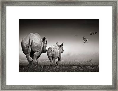 Black Rhino Cow With Calf  Framed Print