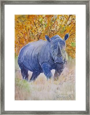 Black Rhino Is The Evening Sun Framed Print by Samanvitha Rao