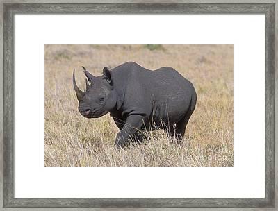 Black Rhino On The Masai Mara Framed Print by Sandra Bronstein