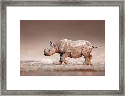 Black Rhinoceros Baby Running Framed Print by Johan Swanepoel