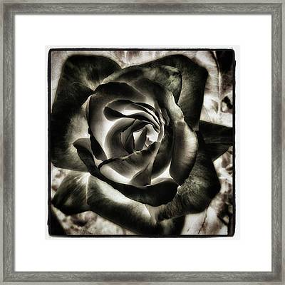 Framed Print featuring the photograph Black Rose. Symbol Of Farewells by Mr Photojimsf