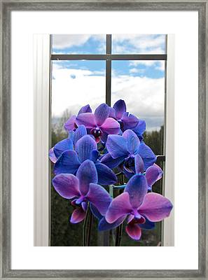 Blue Framed Print featuring the photograph Black Sapphire Orchids  by Aaron Berg