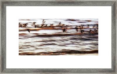 Framed Print featuring the photograph Black Skimmers Of Long Beach - Mississippi - Birds by Jason Politte