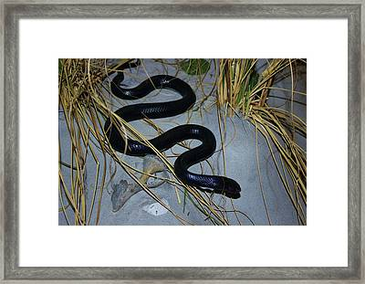 Black Snake Framed Print by Cynthia Guinn