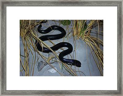 Black Snake Framed Print