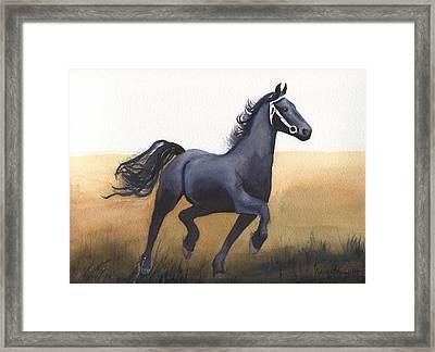Black Stallion Framed Print by Kathy Nesseth