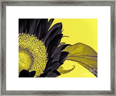 Black Sunflower Framed Print by Karen Lewis