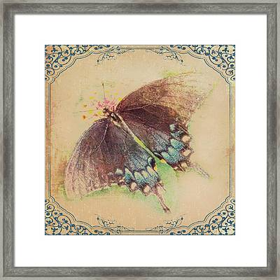 Black Swallowtail Butterfly Framed  Framed Print