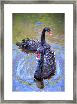 Framed Print featuring the photograph Black Swans by Susan Rissi Tregoning
