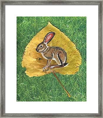 Black Tail Jack Rabbit  Framed Print