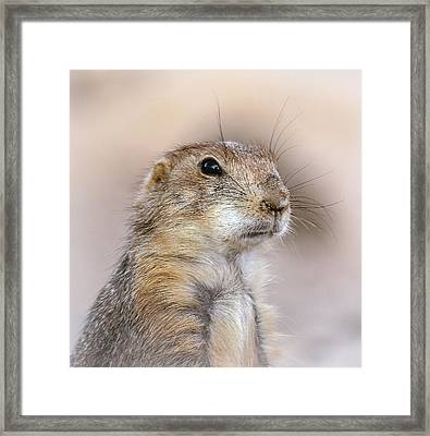 Black Tail Prairie Dog Framed Print