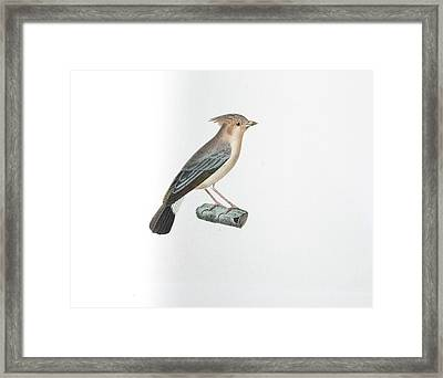 Black Tailed Tipenger Framed Print
