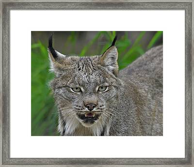 Black Tips Framed Print by Tony Beck