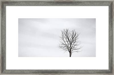 Black Tree White Sky Framed Print by Scott Norris